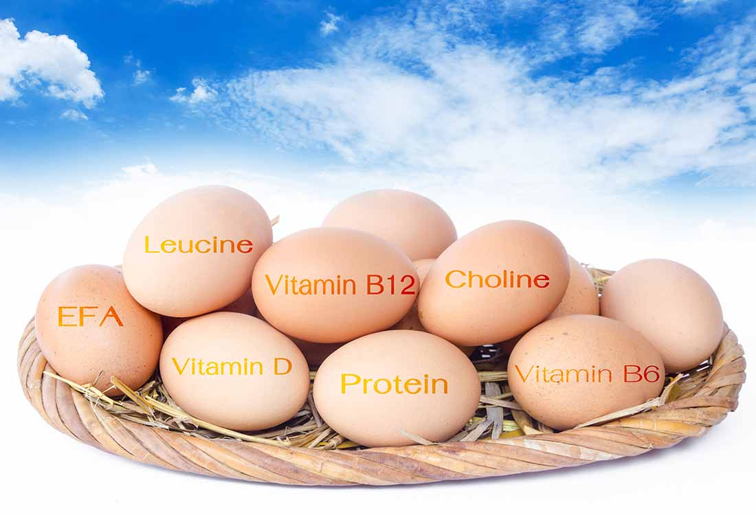 Foods Which Contain Choline