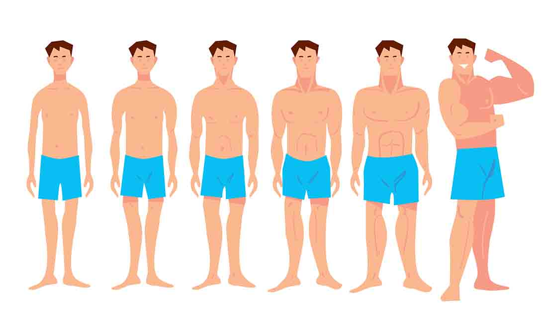 Cartoon of Various Male Physiques - From Skinny To Bodybuilder.