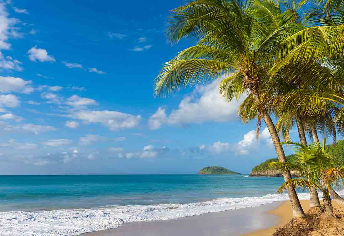 A Tropical Beach With Coconut Trees.