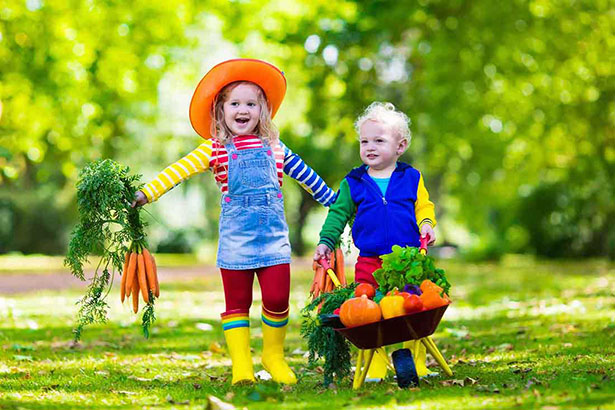 Two Happy Young Children Picking Their Own Vegetables.