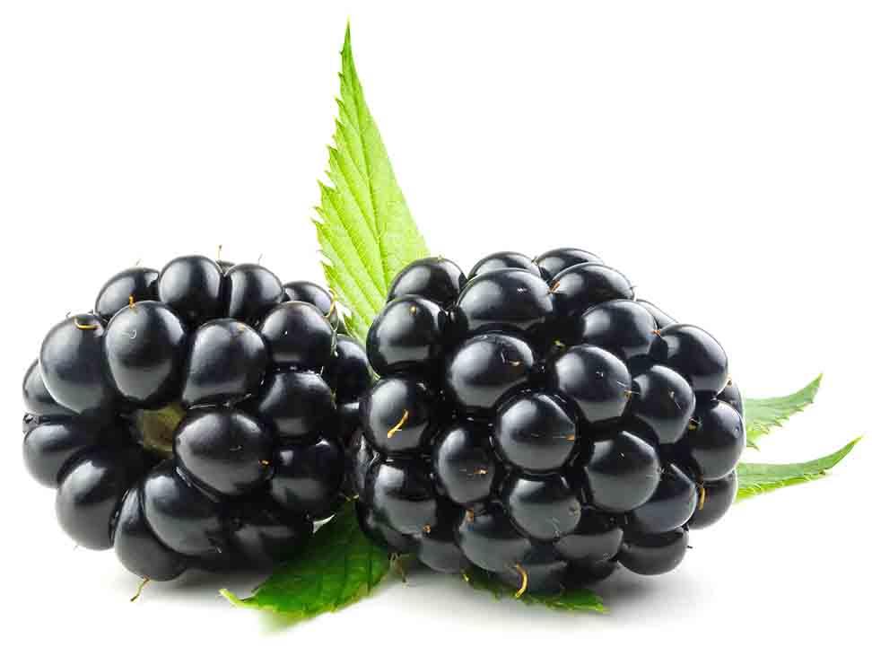 Picture of blackberries.