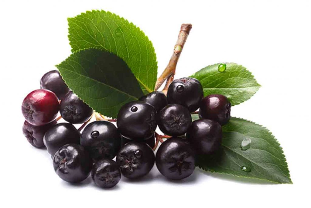 Picture of some chokeberries (Aronia).
