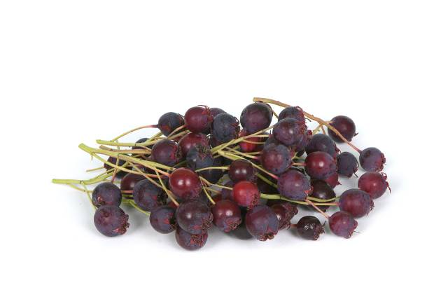 A Pile of Juneberries.