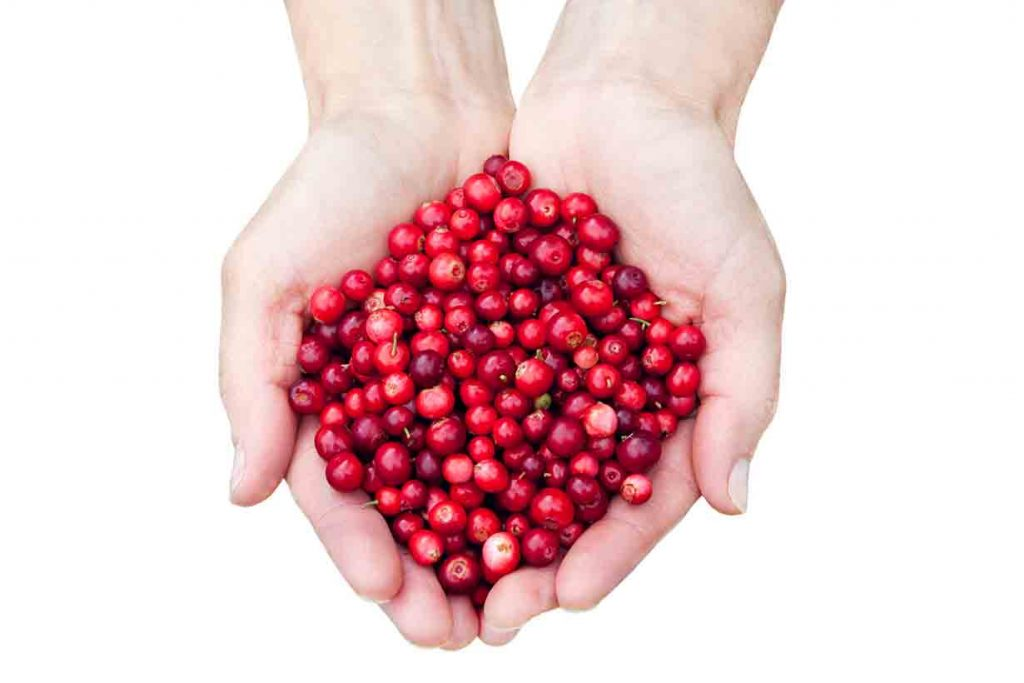 A woman holding lingonberries in her hands.