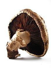 Picture of a portobello mushroom.