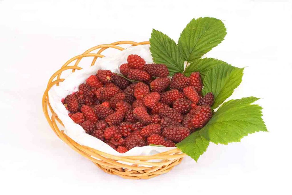 Picture of tayberries in a basket.