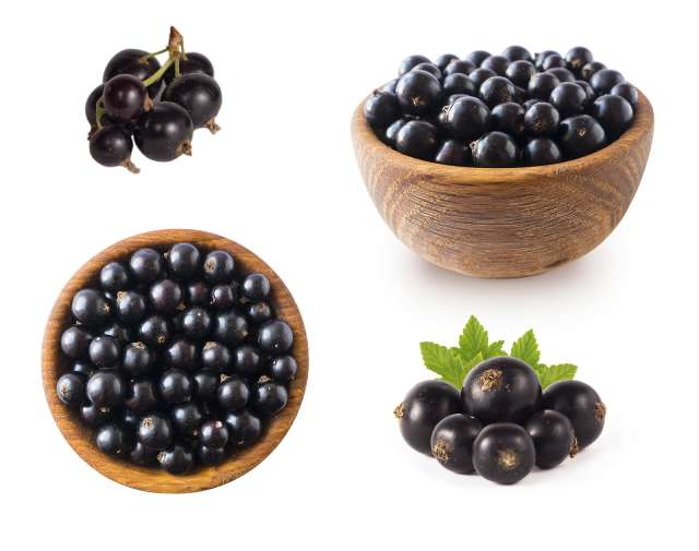 Various Blackcurrants In Piles and Bowls.