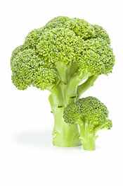 Picture of broccoli - low carb vegetables