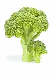 Picture of a Broccoli Stalk.