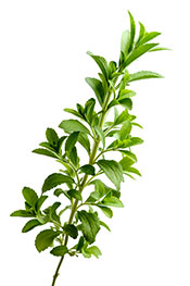 Picture of stevia - best natural sweeteners for a low carb diet