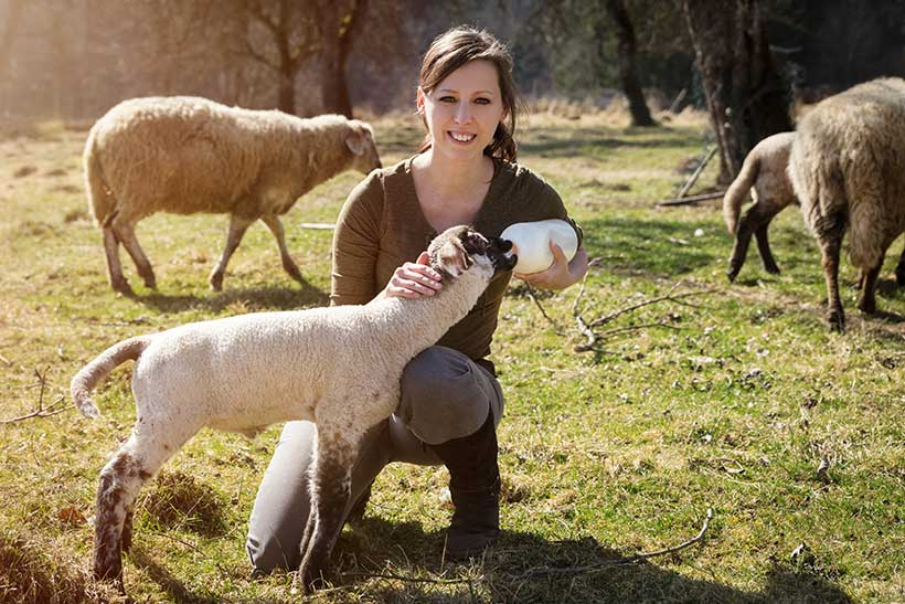 Picture of a young lady feeding a lamb in a field.