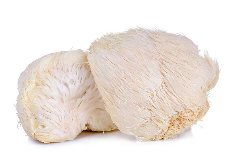 Picture of Lion's Mane Mushrooms (Hericium erinaceus).