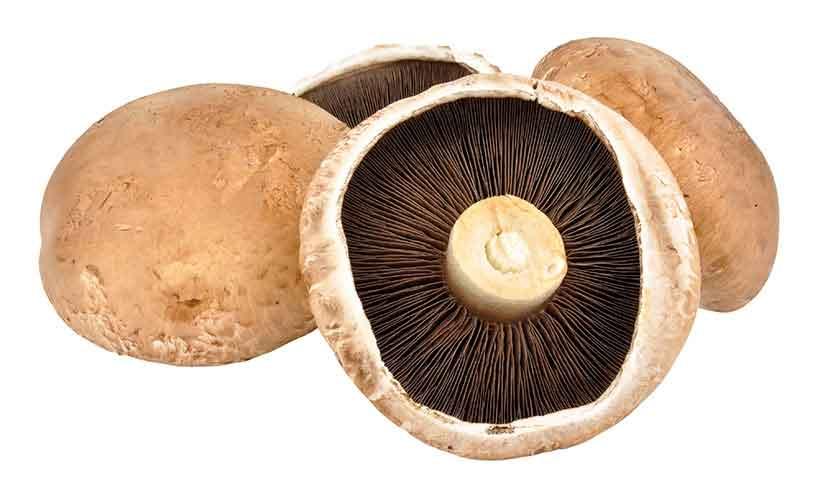 Picture of portobello mushrooms (Agaricus bisporus).