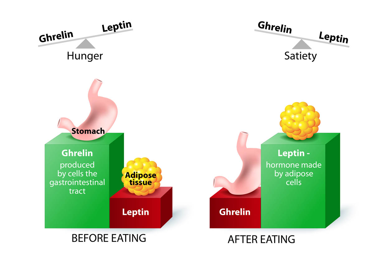 The Importance of Satiety: How It Controls Food Cravings