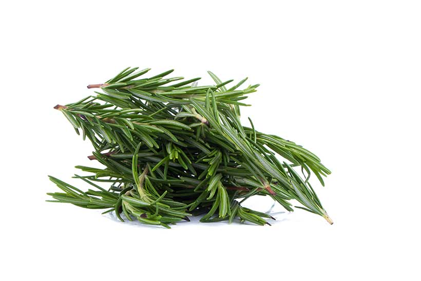 A Bunch of Rosemary Sprigs.