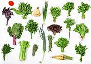 Various Leafy Green Vegetables and Plant Foods.