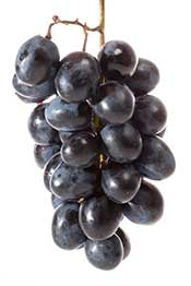 Picture of a Bunch of Black Grapes Clumped Together.