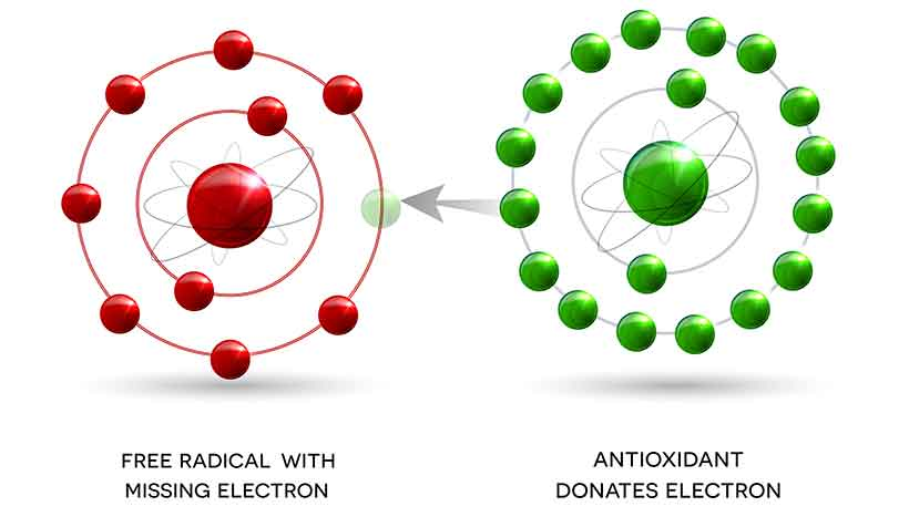 Diagram of an Antioxidant Donating an Electron to a Free Radical.
