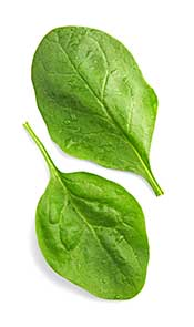 Spinach Leaves: A Rich Source of Polyphenols.