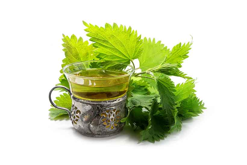 Picture of Nettle Tea Next To Nettle Leaves.
