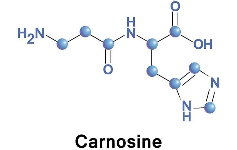 The Molecular Element For L-Carnosine.