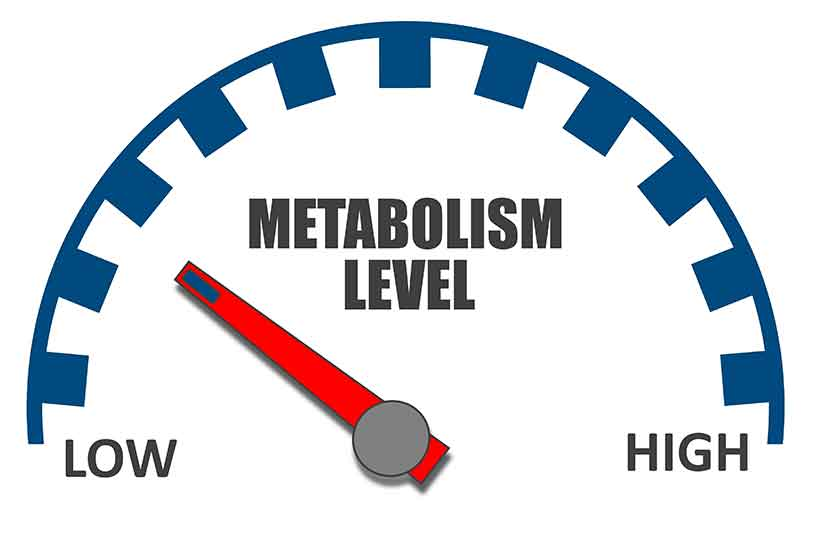 A Diagram Showing a High to Low Metabolism (Metabolic Rate) Scale.