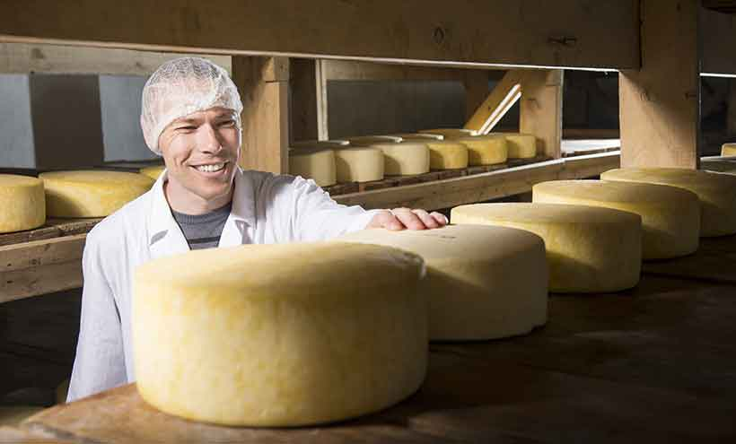 A Cheesemaker Looking At Large Wheels of Cheese.