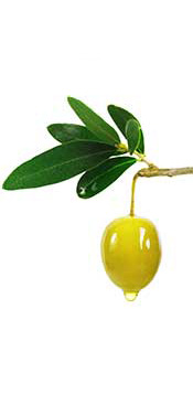 A Fresh Green Olive With Olive Oil Dripping From It.