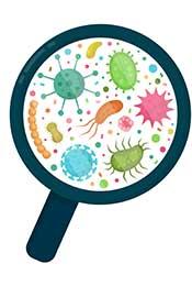 Various Bacterial Microorganisms.