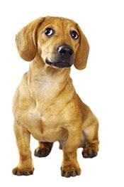 A Pet Dog Wanting To Run Around.