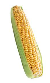 Corn on the Cob Surrounded By Green Outer Leaf.