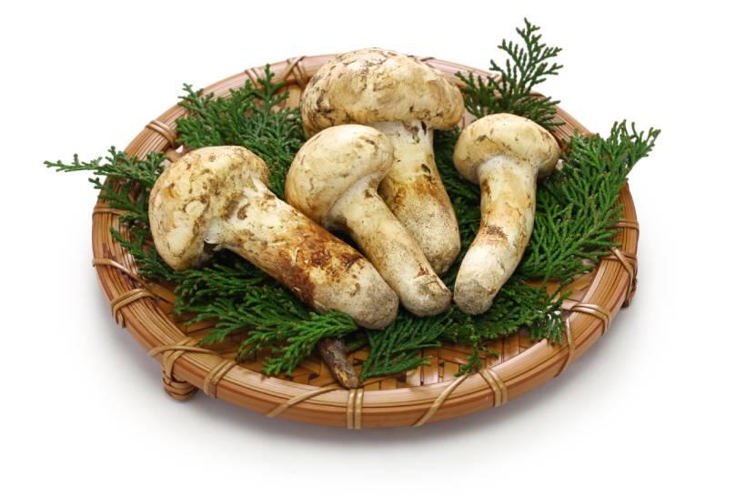 Raw Matsutake Mushrooms On a Plate.