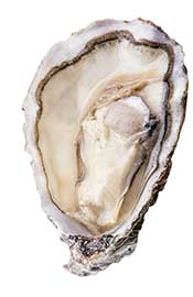 An Oyster Within Its Shell.
