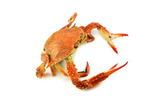 A Steamed Whole Crab.