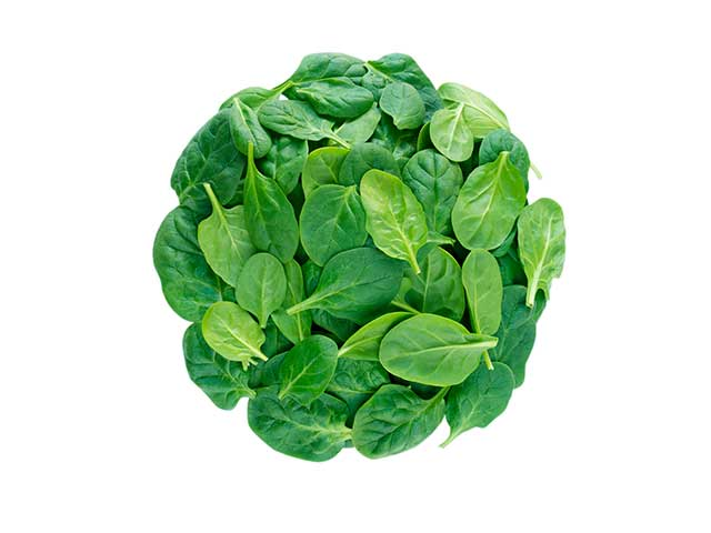 A Large Collection of Spinach Leaves.