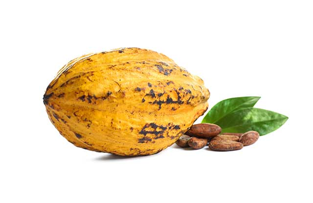 A Ripe Yellow Cocoa Pod Next To Some Cocoa Beans.