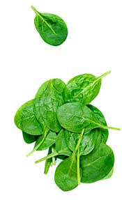 A Pile of Green Spinach Leaves.
