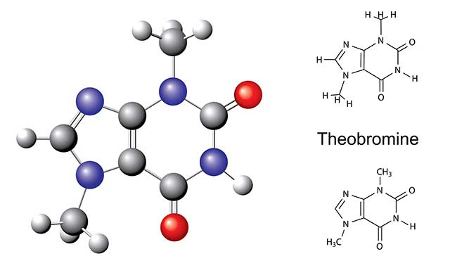 The Chemical Structure of Theobromine.