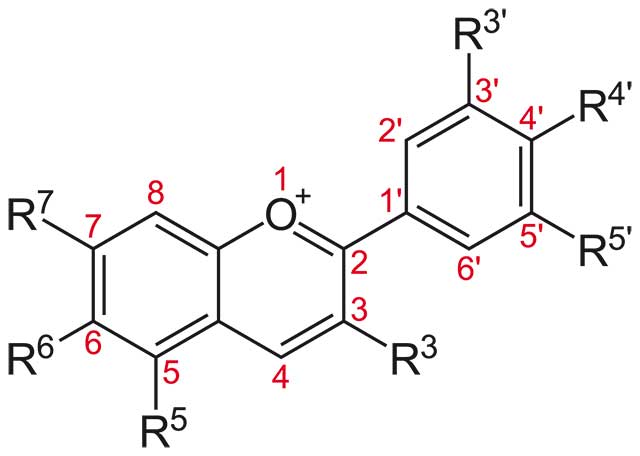 The Structure of Anthocyanidine.