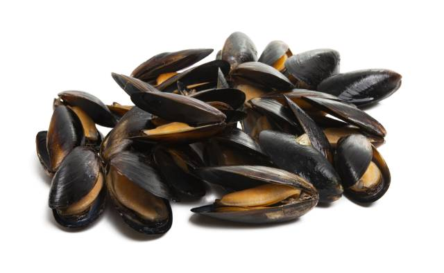 A Pile of Mussels.