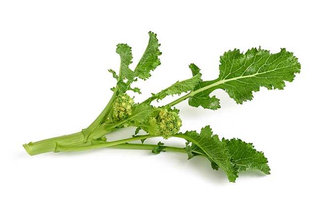 Turnip Greens On a White Background.