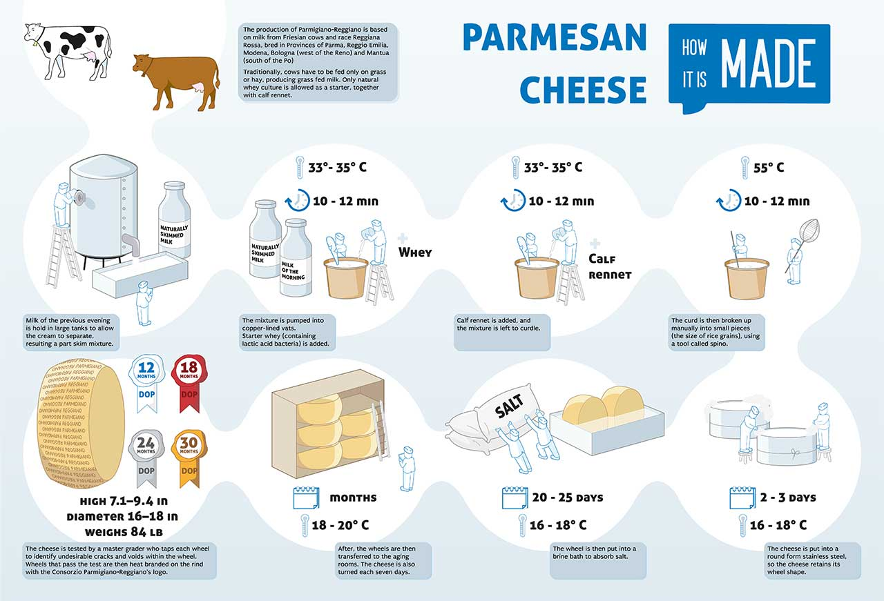 Infographic Showing How Parmigiano-Reggiano Cheese Is Made.