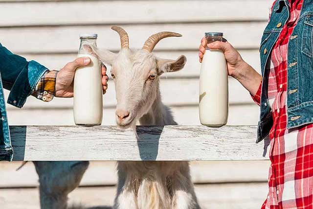 A Farmer Holding Goat Milk Standing Next To a Goat.