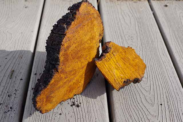 A Large Chunk of Dried Chaga Mushroom.
