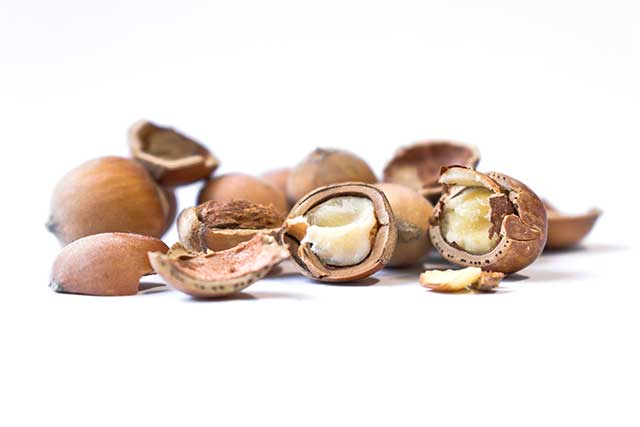 Fresh Wild Hazelnuts - In Their Shells and Kernels.