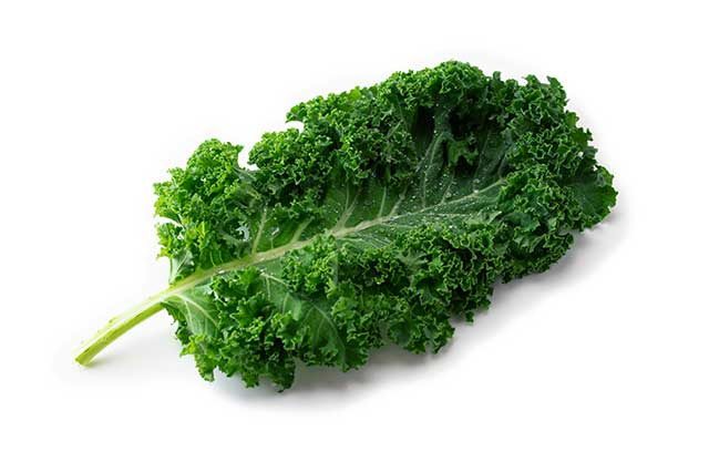 A Large Kale Leaf On a White Background.