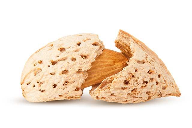 Almond Nut Still In Its Shell.