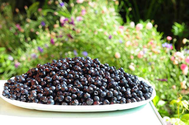 A Plate Full of Small Fresh Wild Berries. In the Countryside.