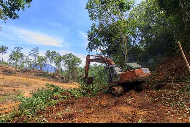 Borneo Tropical Rainforest Deforestation For Palm Oil Plantations.