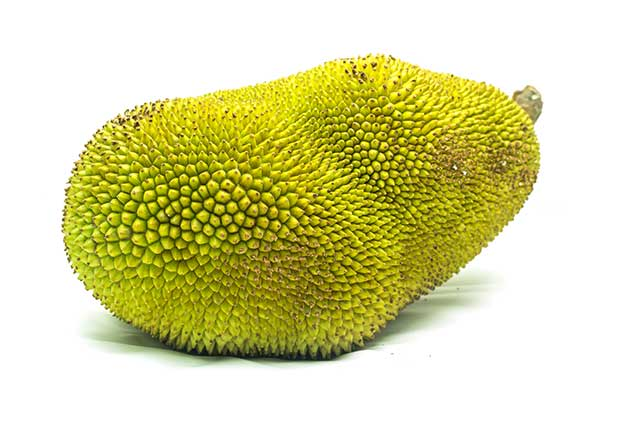 Large, Green, and Spiky Jackfruit (The World's Largest Fruit).